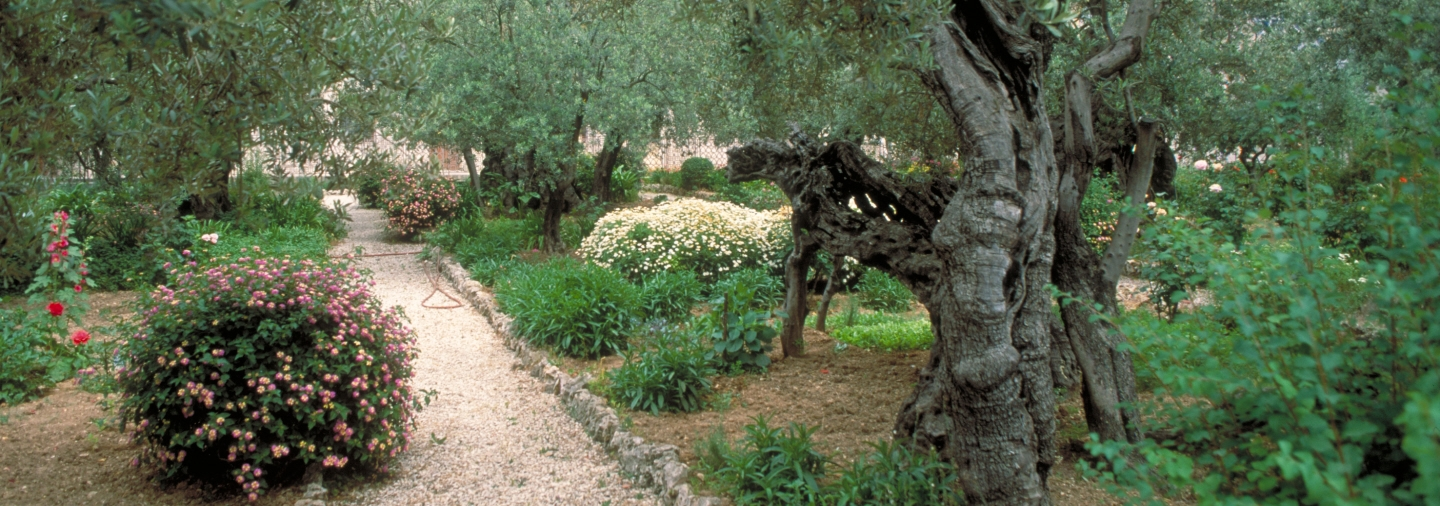 Author Unknown, Garden of Gethsemane